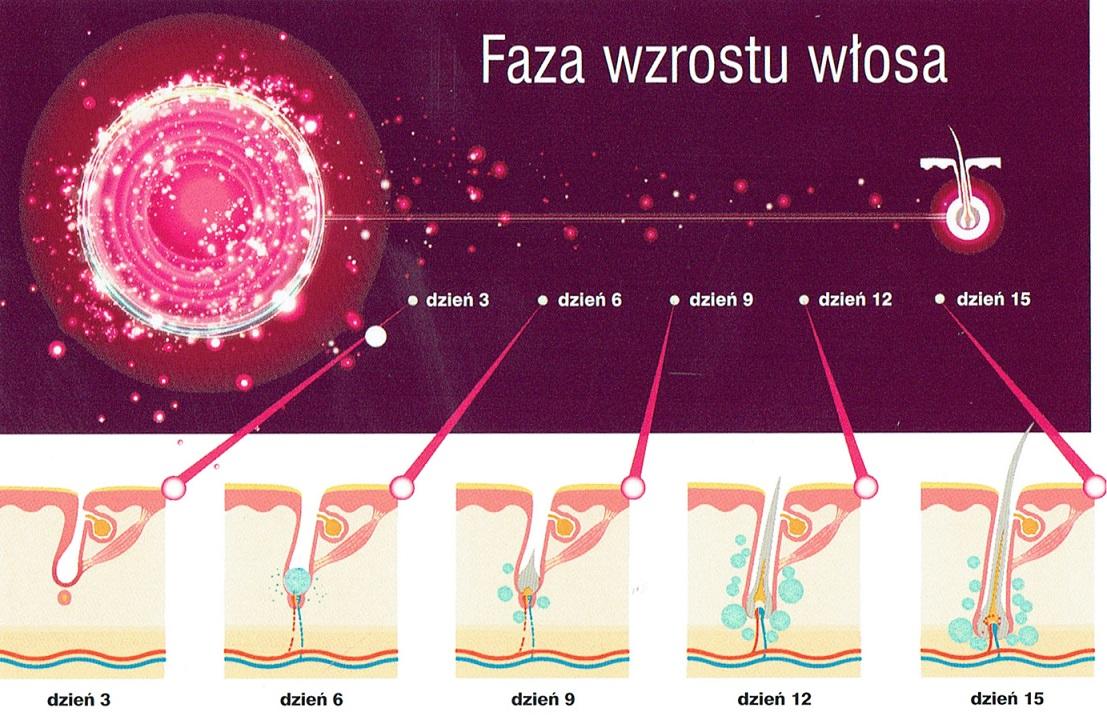 fazy-wzrostu-wlosa-dr-cyj